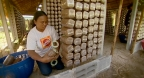 Mushroom powered livelihoods highlighted at Rio+20
